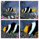 Neewer® 52MM Professionelle Komplette Objektiv-Filter Zubehörsatz für Nikon D3300 D3200 D3100 D3000 D5300 D5200 D5100 D5000 D7000 D7100 DSLR-Kamera, Set umfasst: (1) Filterset (UV, CPL, FLD) + (1) Makro Nahaufnahme Filter Set (+ 1, +2, +4, +10) + (1) Grau-08